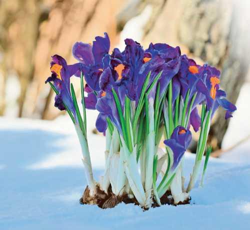 Март: работы в вашем саду