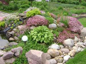 Рокарий в вашем саду